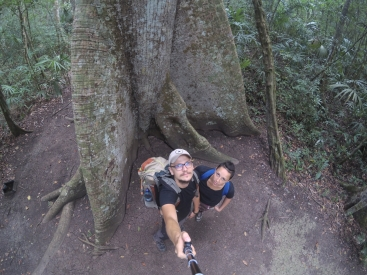 The sacred Mayan tree